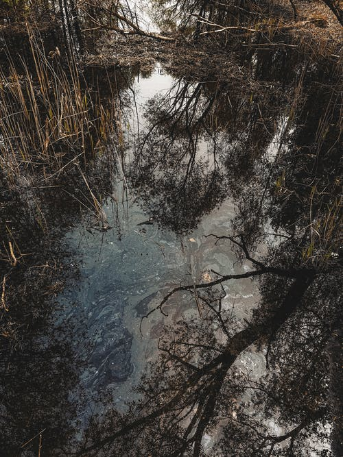 High angle of marsh with grass and reflection of plants around in grove