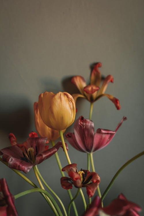 Бесплатное стоковое фото с аромат, Ароматический, благоухающий