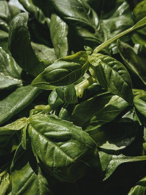 Abundance of green plant leaves in sunlight