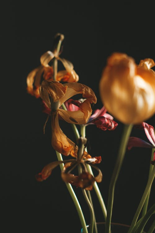 Bouquet of withered flowers in room