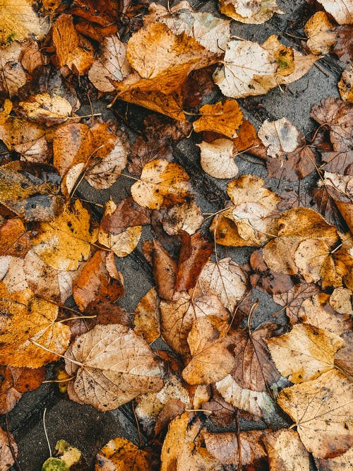 Top view heap of fallen withered faded brown and yellow leaves with veins covering dirty wet ground on cold autumn day