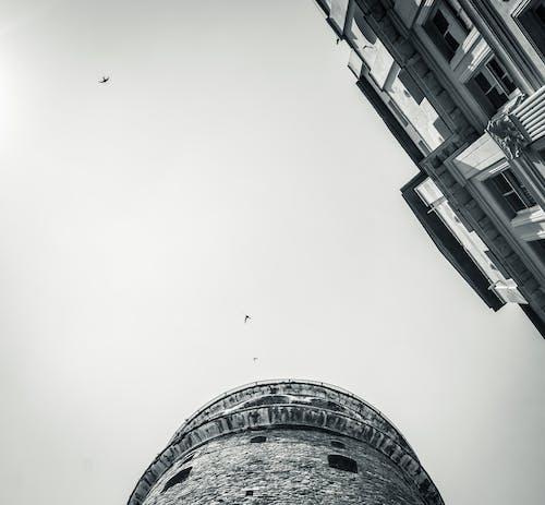 Free stock photo of bird, galata, sky