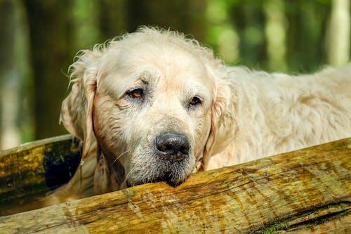White Short Coated Dog Lying on Brown Wooden Log