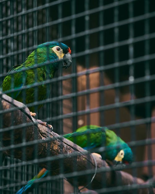 Free stock photo of bird, colored, zoo