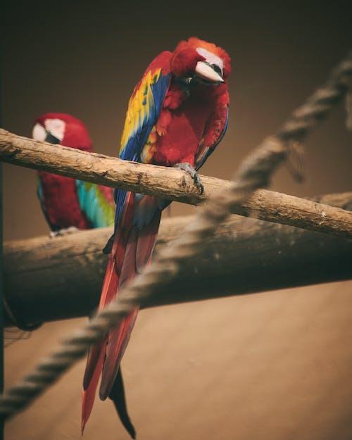 Free stock photo of animal, bird, color