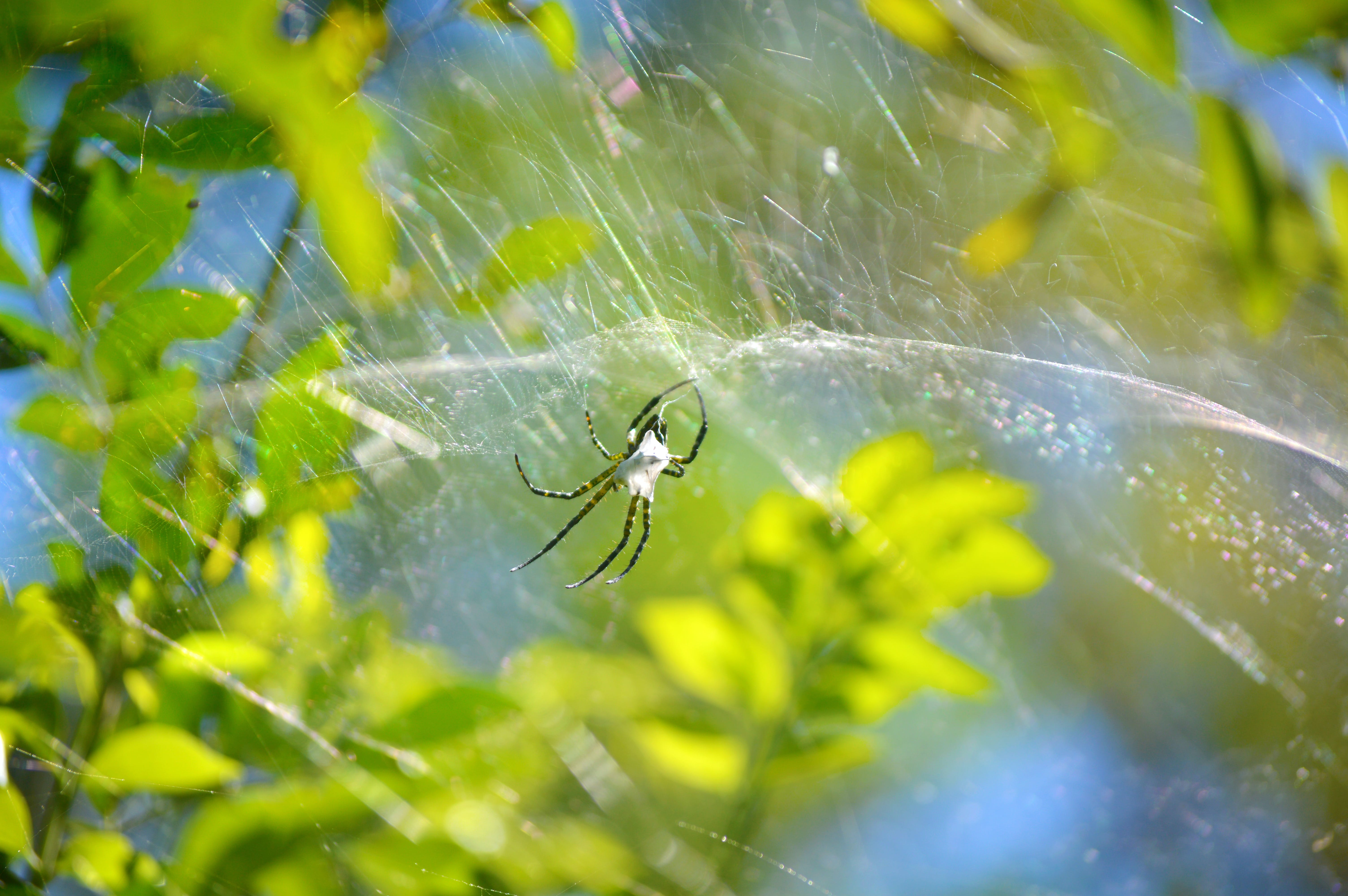 Free stock photo of blur, cobweb, focus, insect