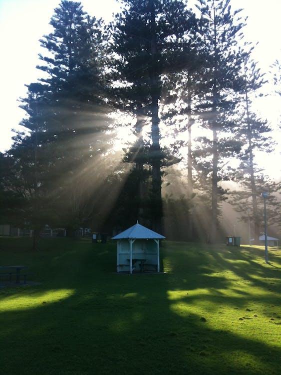 Free stock photo of park, sunlight through trees, white hut