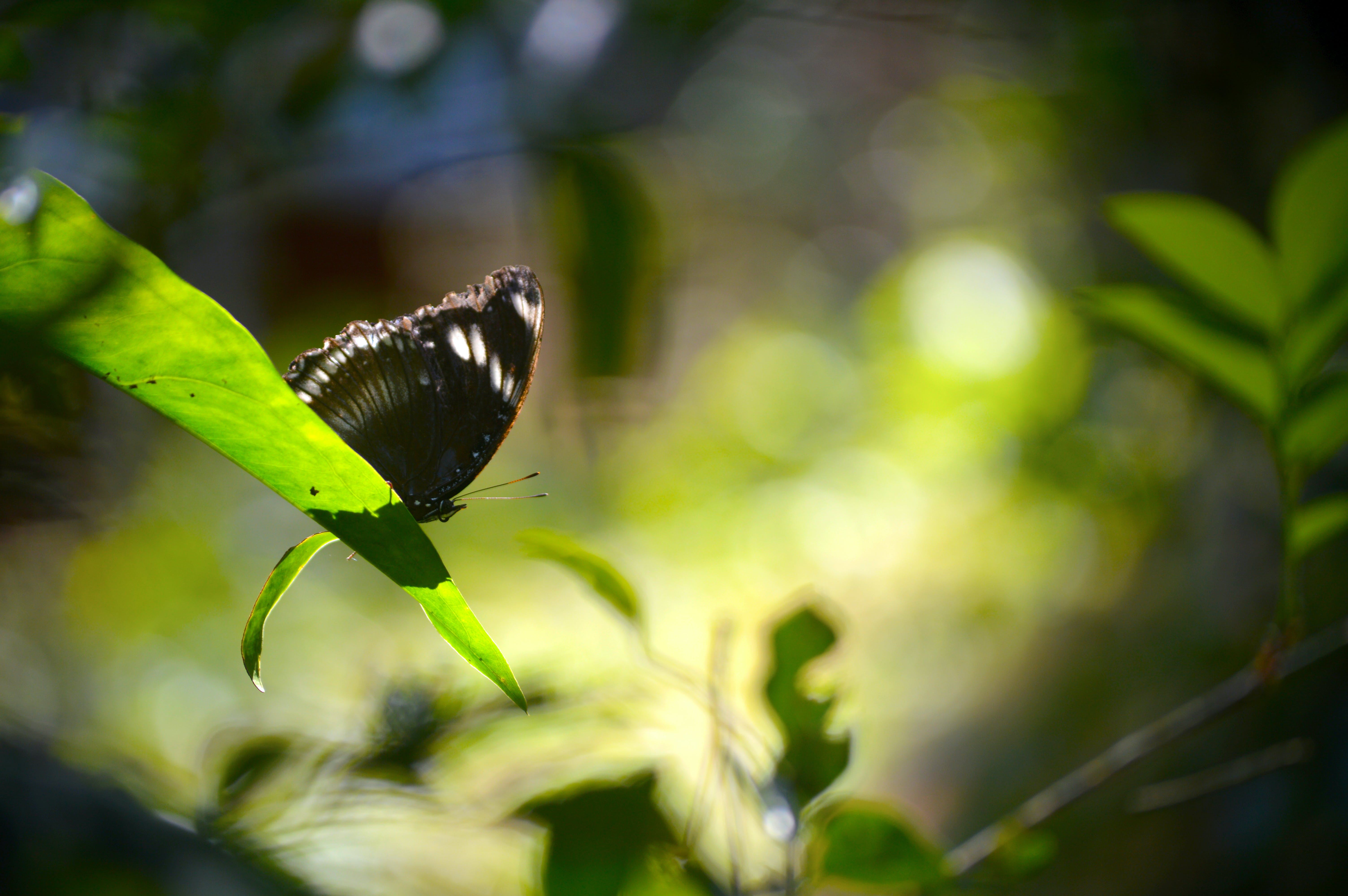 Free stock photo of butterflies, butterfly, forest, insect