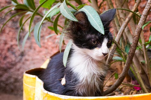 Free stock photo of stray cat in marrakech