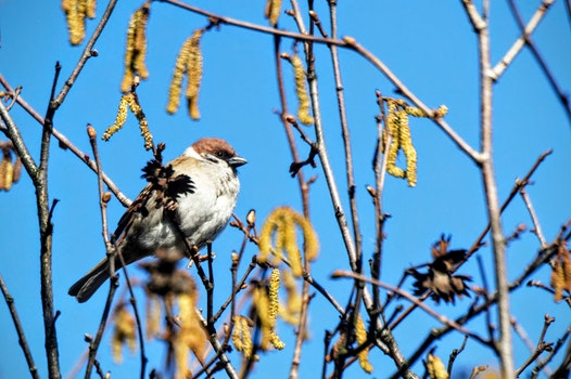 Free stock photo of bird, sparrow