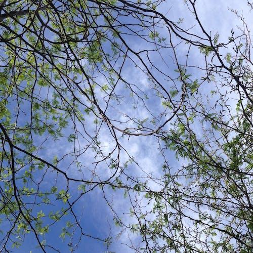 Free stock photo of blue, green, sky through trees