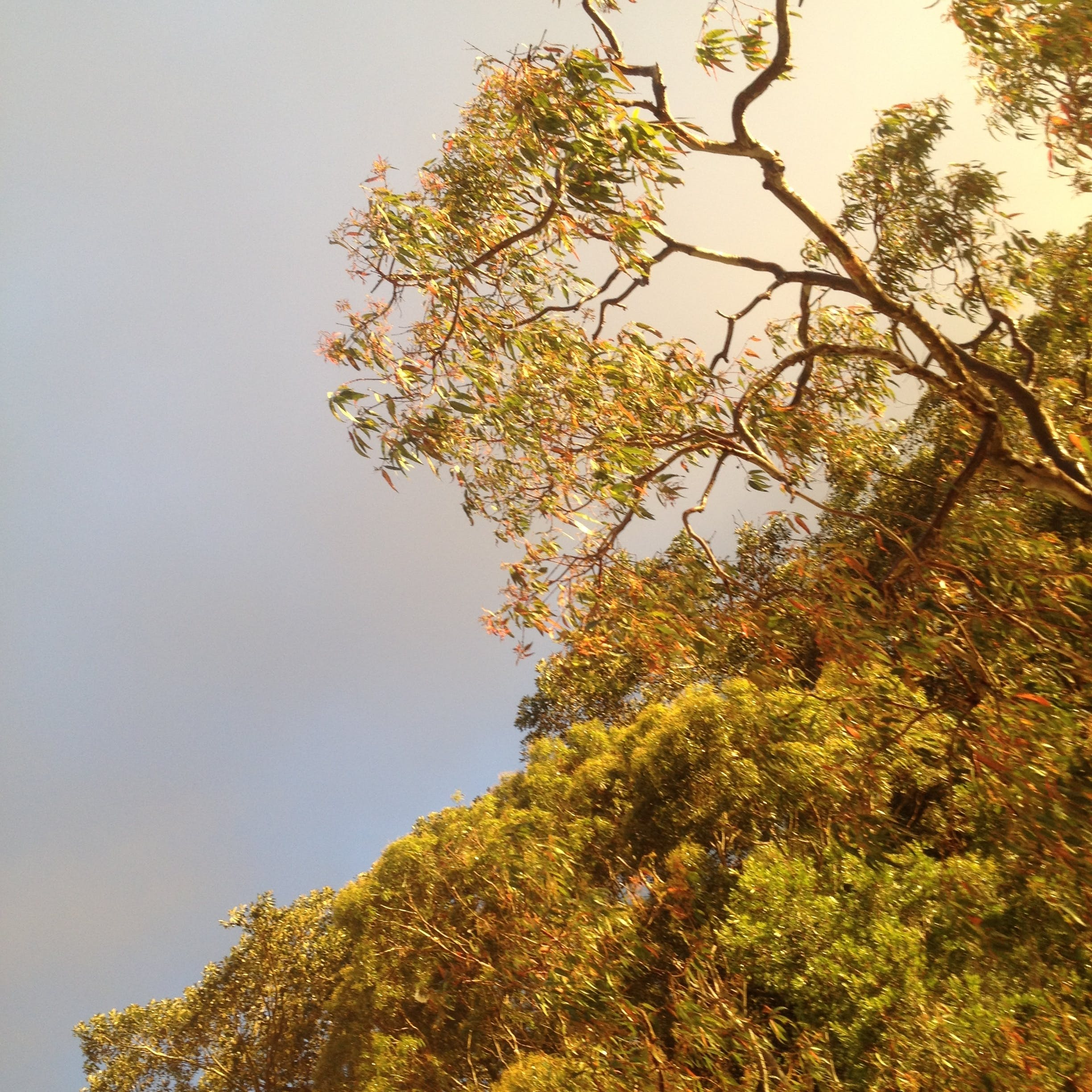 Green Leaf Tree With Cloudy Sky
