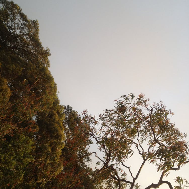 Free stock photo of after sunset, grey skys, trees
