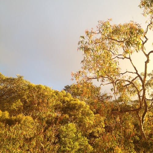 Free stock photo of glow, grey sky, sunset