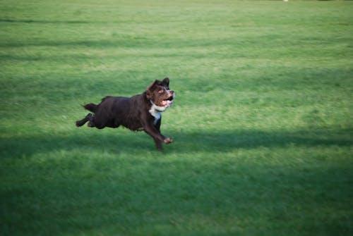 Free stock photo of brown dog, dog