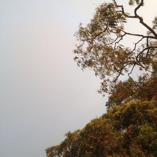 Darmowe zdjęcie z galerii z drewno, drzewo, gałąź, kolor