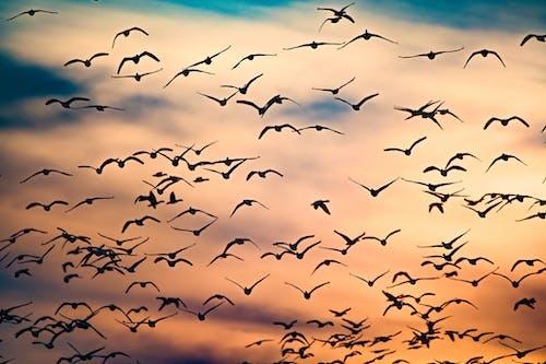 Flock of Birds Flying Under Blue Sky