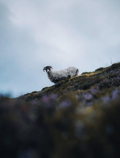 Fotos de stock gratuitas de al aire libre, animal, ascender
