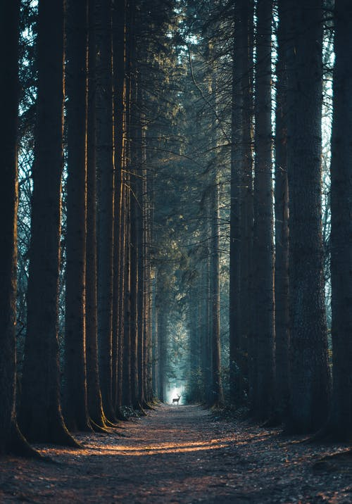Fotos de stock gratuitas de abstracto, amanecer, árbol