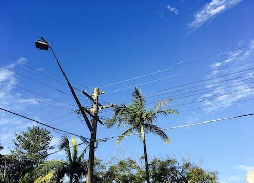 Free stock photo of blue sky, palm tree, telegraph pole