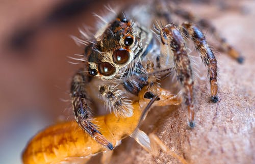 Brown and Black Spider on Brown Leaf