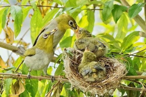 Free stock photo of bird, bird nest, nest