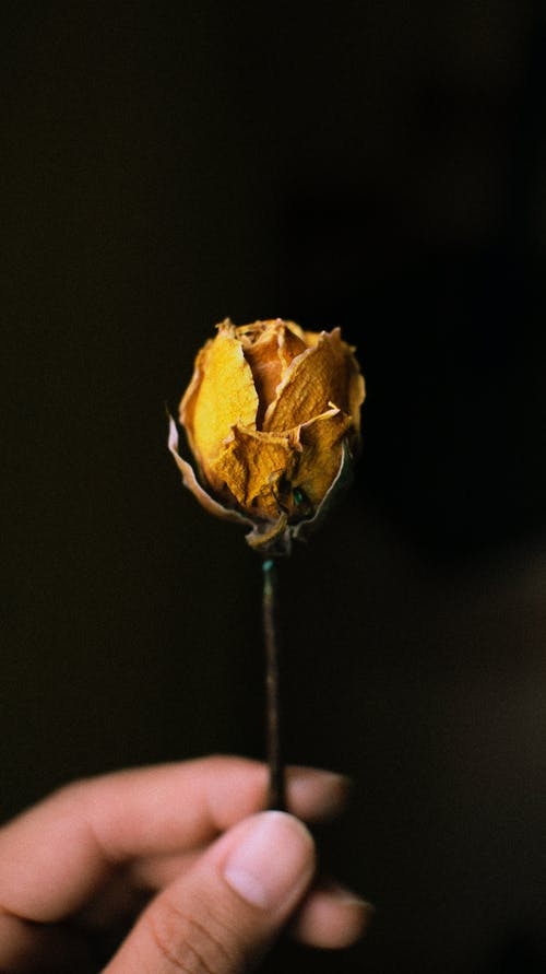 Foto stok gratis acara, alami, anonim