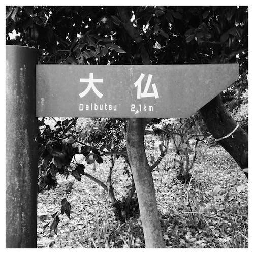 Free stock photo of buddha, great, japan, kamakura