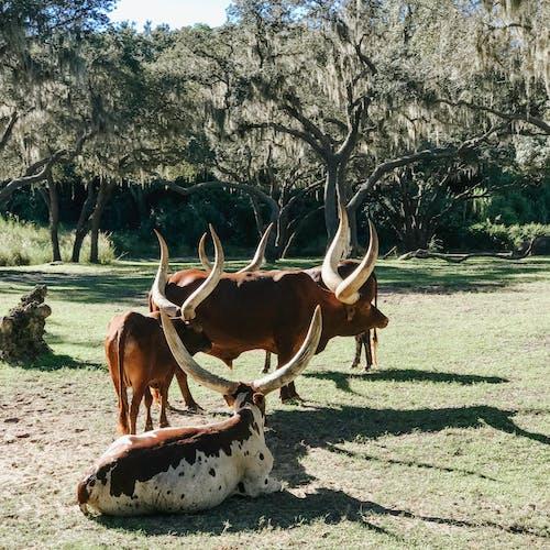 Free stock photo of animals, safari, wildlife