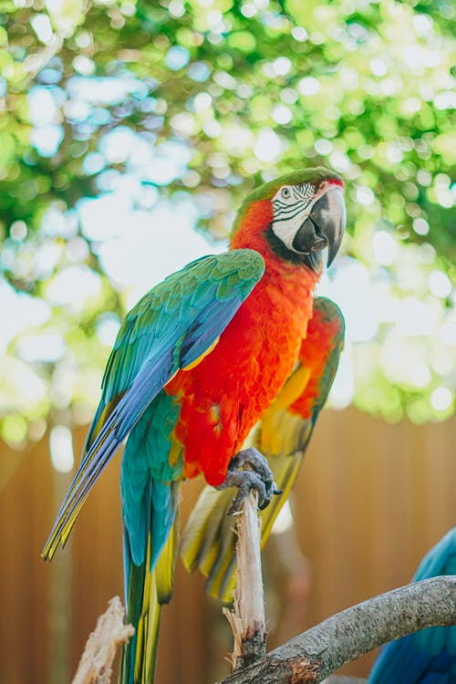 Free stock photo of animal, avian, aviary