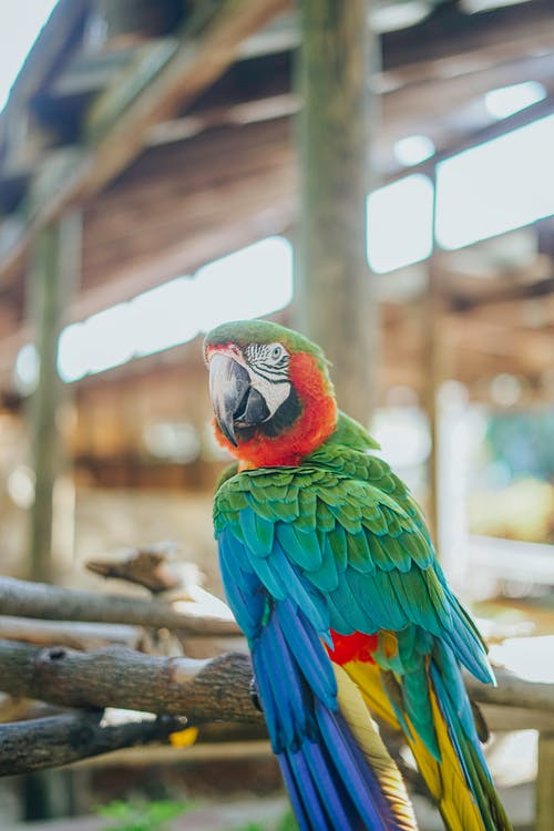 Free stock photo of beautiful color, bird, feathers