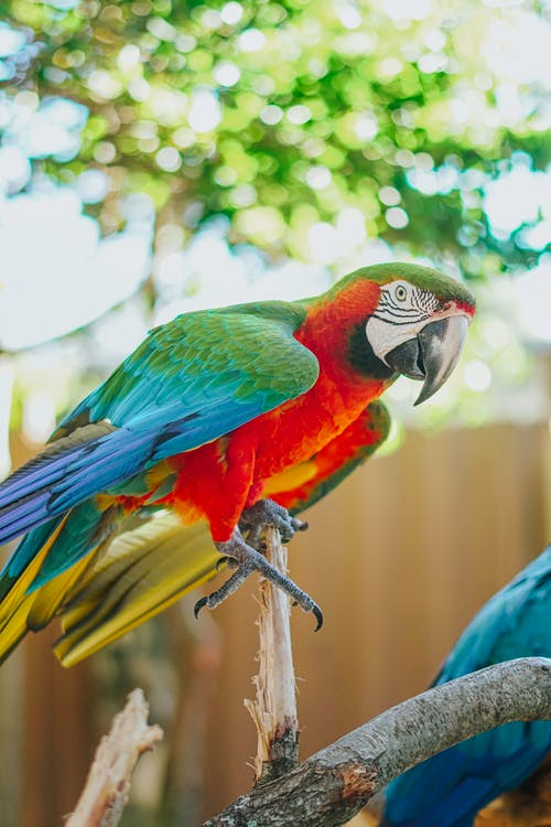 Free stock photo of animal, feather, parrot
