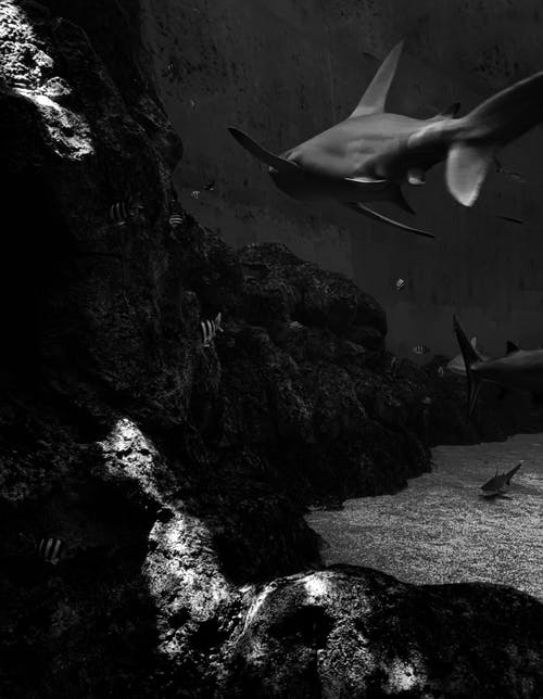 Grayscale Photo of Fish in Cave