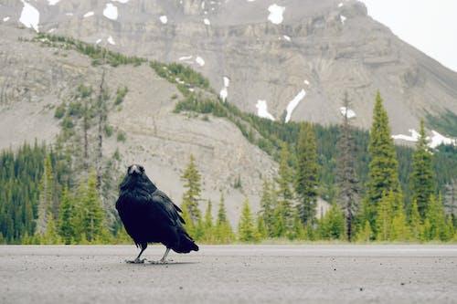 Black Bird on Gray Concrete Pavement Near Green Trees