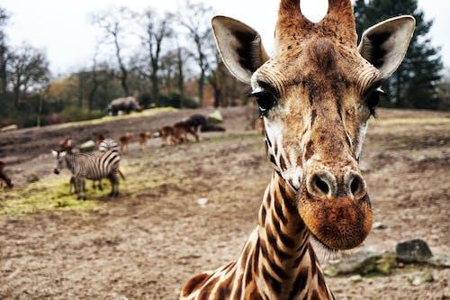 Fotos de stock gratuitas de al aire libre, animal, bárbaro