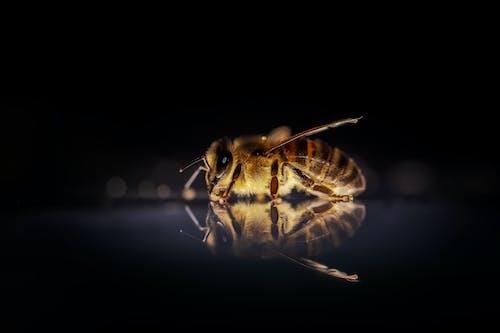 Gratis lagerfoto af antenne, bi, bier
