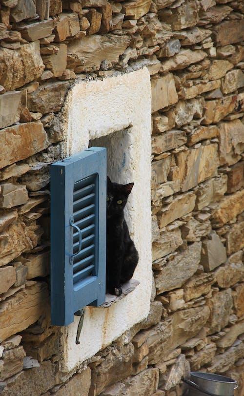 Free stock photo of animal image, cat