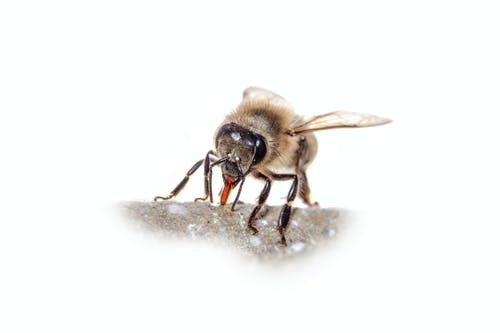 Gratis lagerfoto af bi, bier, dyr