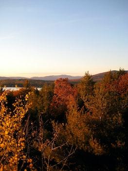 Free stock photo of nature, trees, autumn, fall
