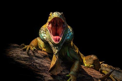 Gratis lagerfoto af dinosaurus, dyr, dyreliv