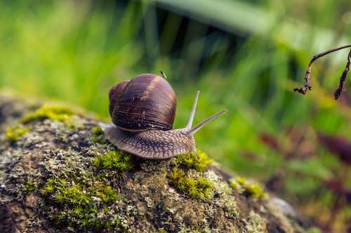 Brown Snail on Green Moss