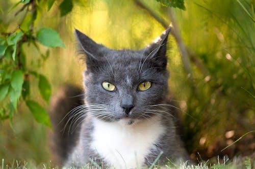 Cute gray cat lying on grass among bushes