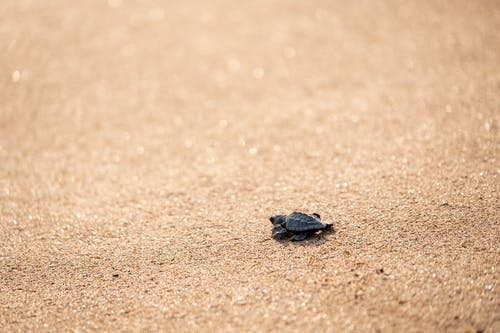 Small turtle crawling on textured sandy ground