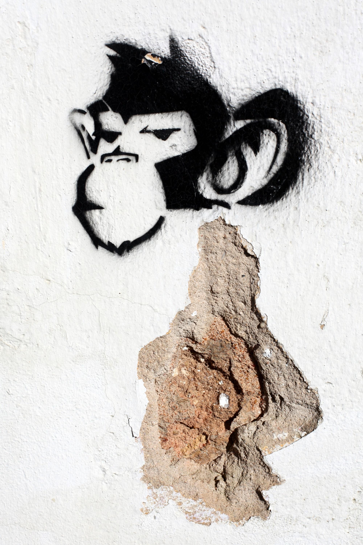 Kostenloses Foto zum Thema: affe, schablone, thema street-art