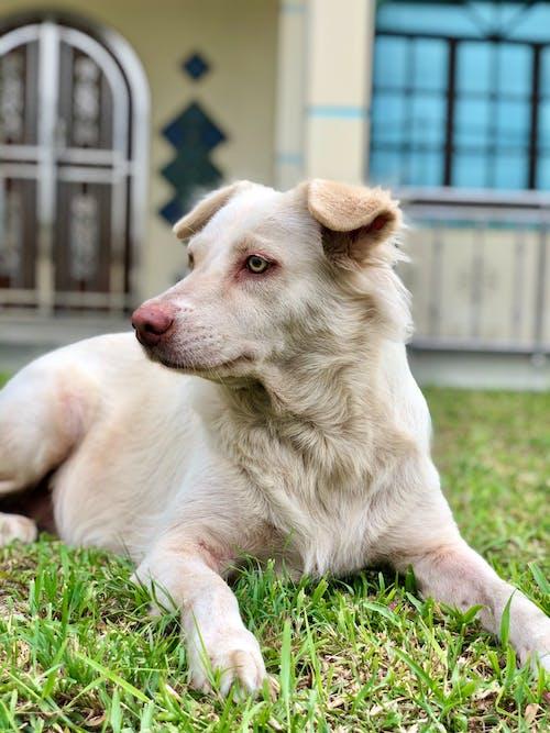 Ilmainen kuvapankkikuva tunnisteilla eläimet, eläinrakas, koiran rakkaus