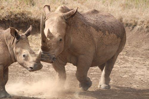 Photos gratuites de animaux, conservation, faune