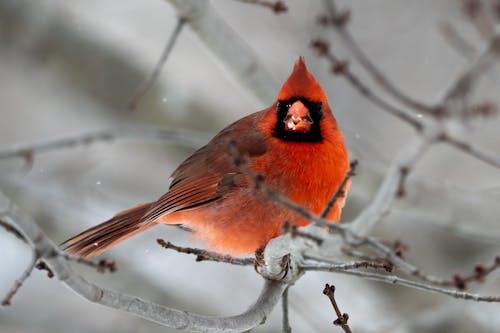 Free stock photo of animal, avian, backyard