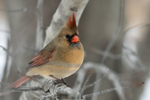 Free stock photo of animal, avian, backyard birds