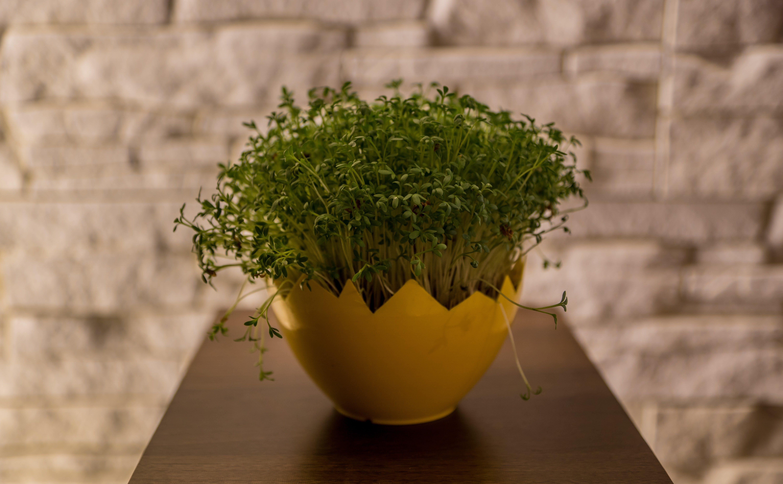 Free stock photo of nature, plant, green, cuckooflower