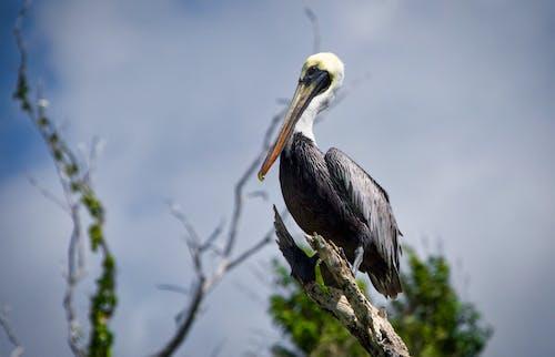 Photos gratuites de animal, arrière-plan flou, aviaire
